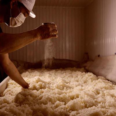 麹室にて麹菌をまんべんなく振りかけます