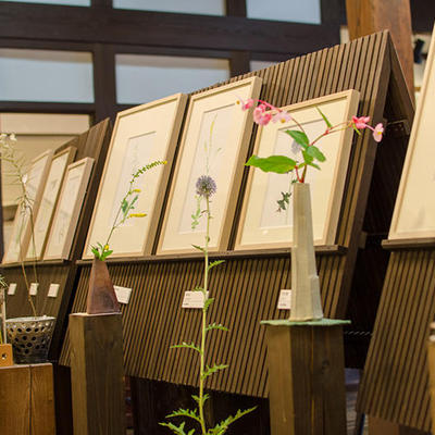 ギャラリーではほとんどの水彩画が実際の野の花と一緒に展示されています。